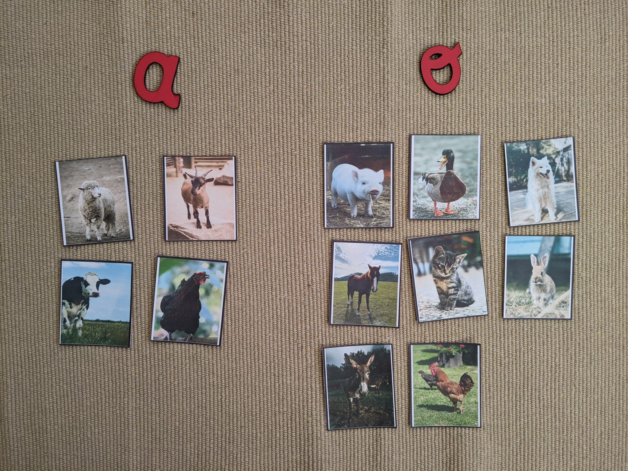 atividade com letras finais dos nomes dos animais