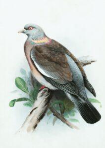 aves de rapina fotos