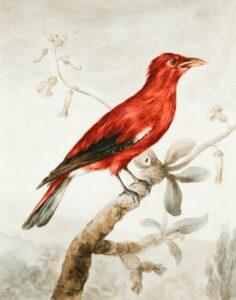 aves imagens