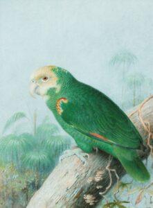 foto de ave brasileira