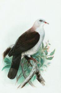 foto de ave grande
