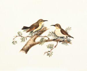foto de ave rara