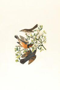 foto de aves