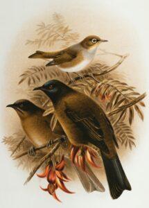 fotos de ave