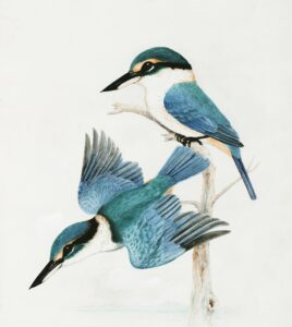 fotos de passarinhos