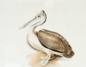 imagem aves