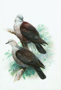 imagem de ave