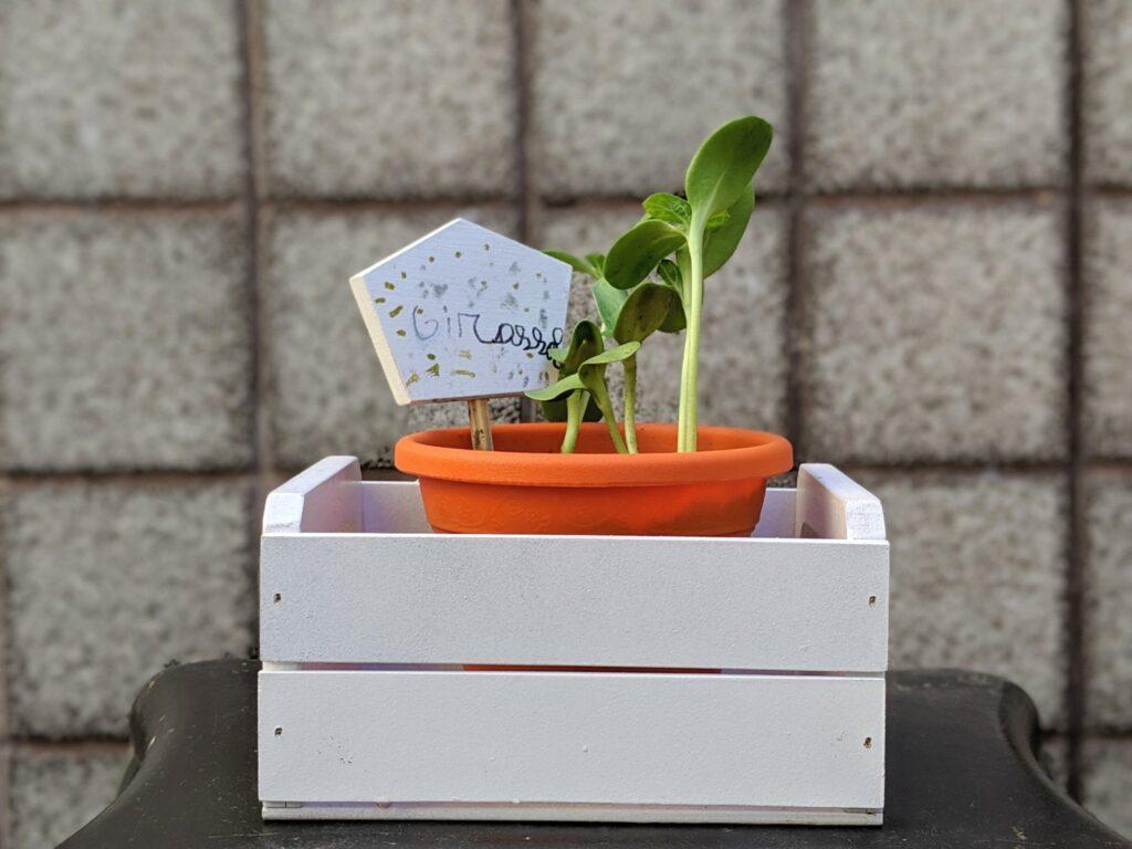 kit de jardinagem infantil