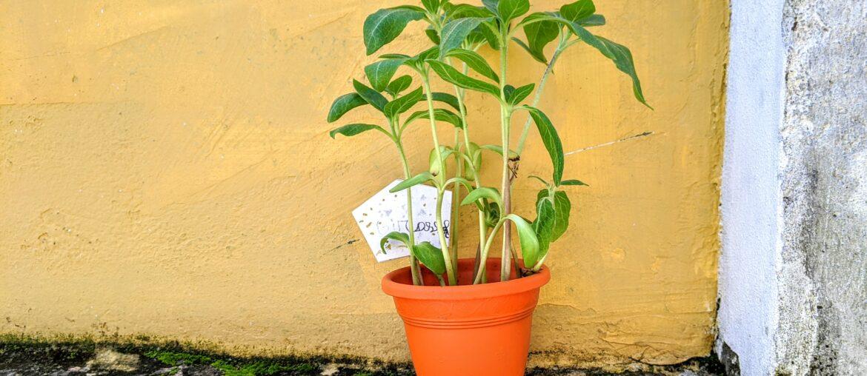 kit para jardinagem infantil