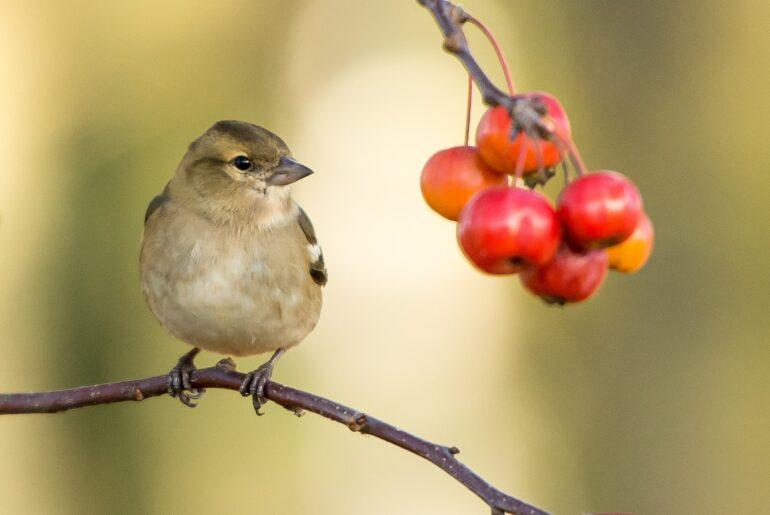 observar aves