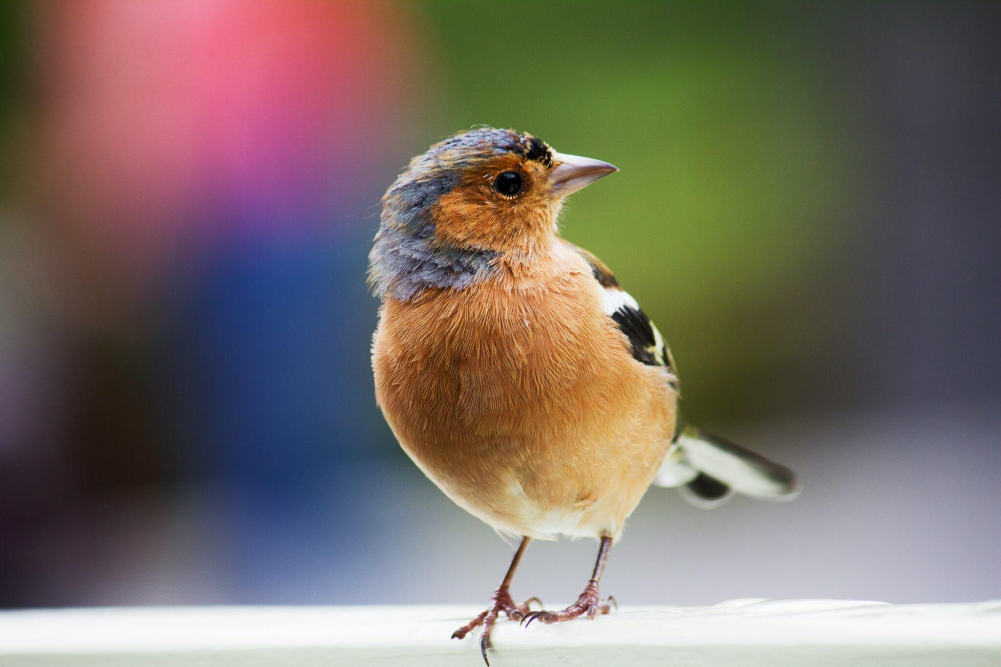 observar aves traz felicidade