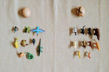 animais oviparos e viviparos para educacao infantil
