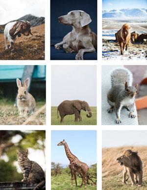 animais viviparos