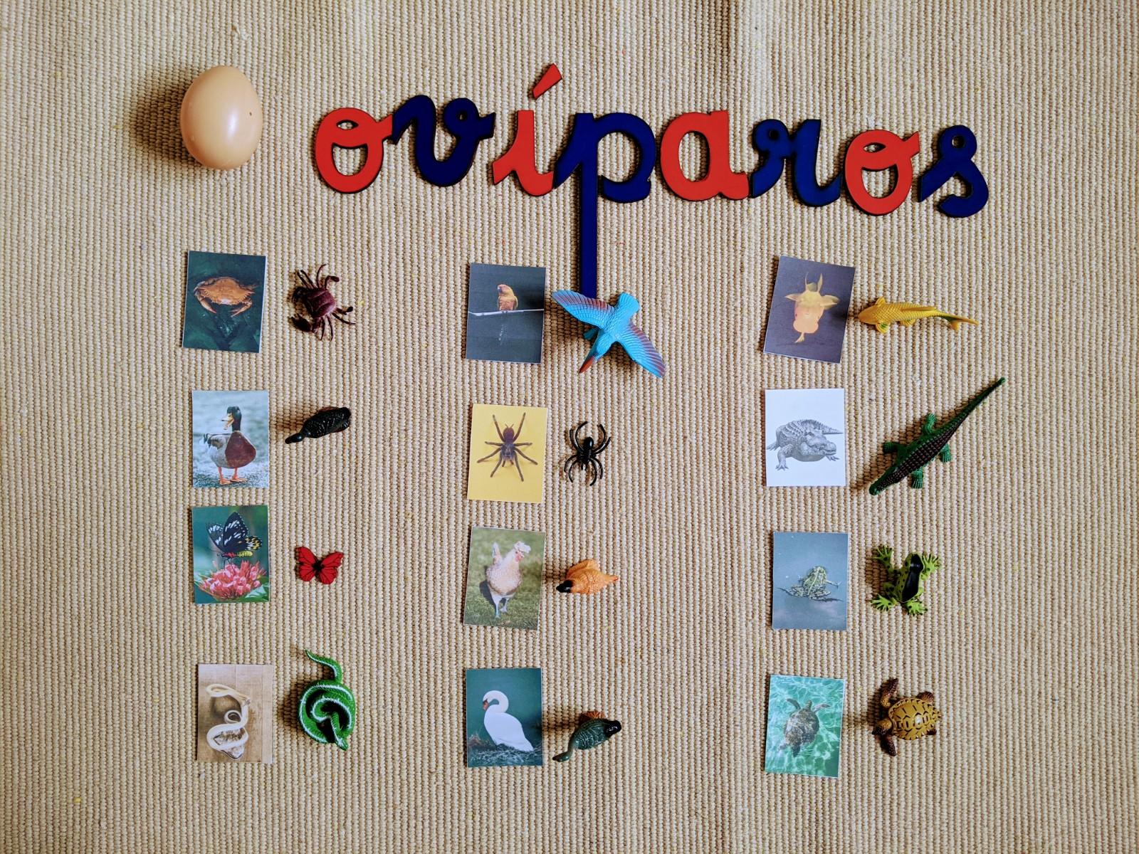 atividade animais oviparos