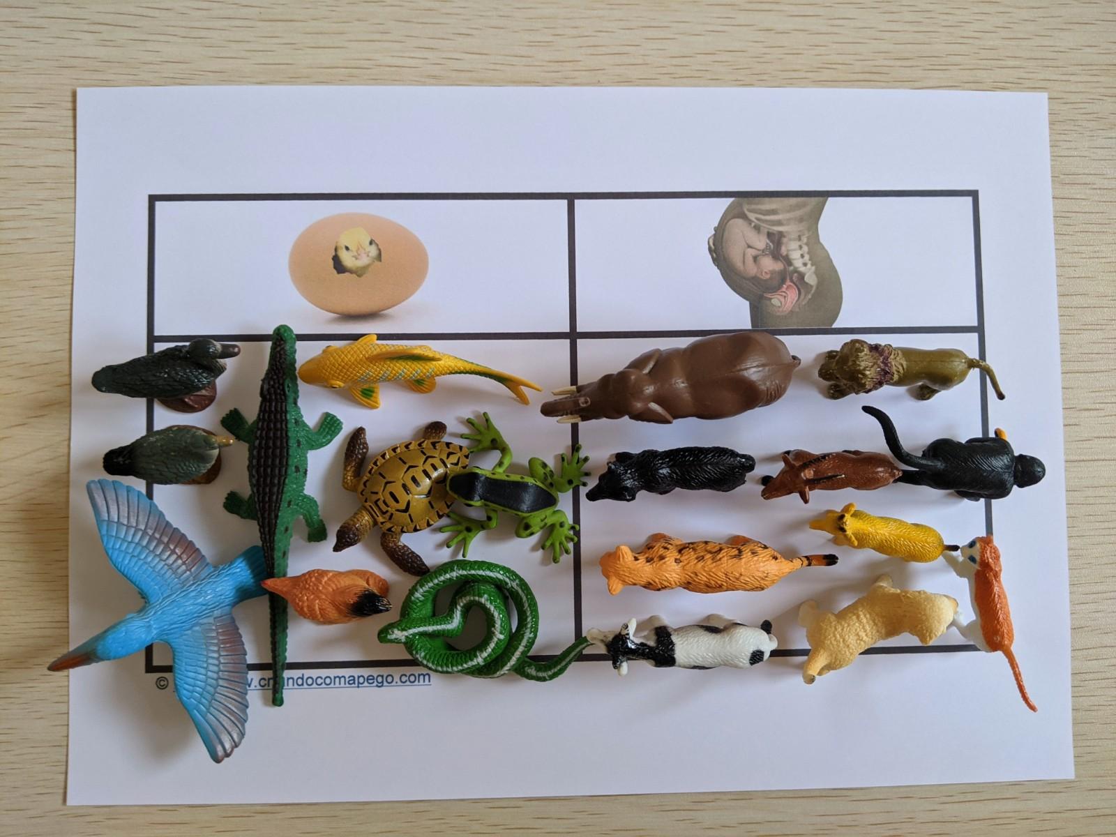 classificacao de animais oviparos e viviparos