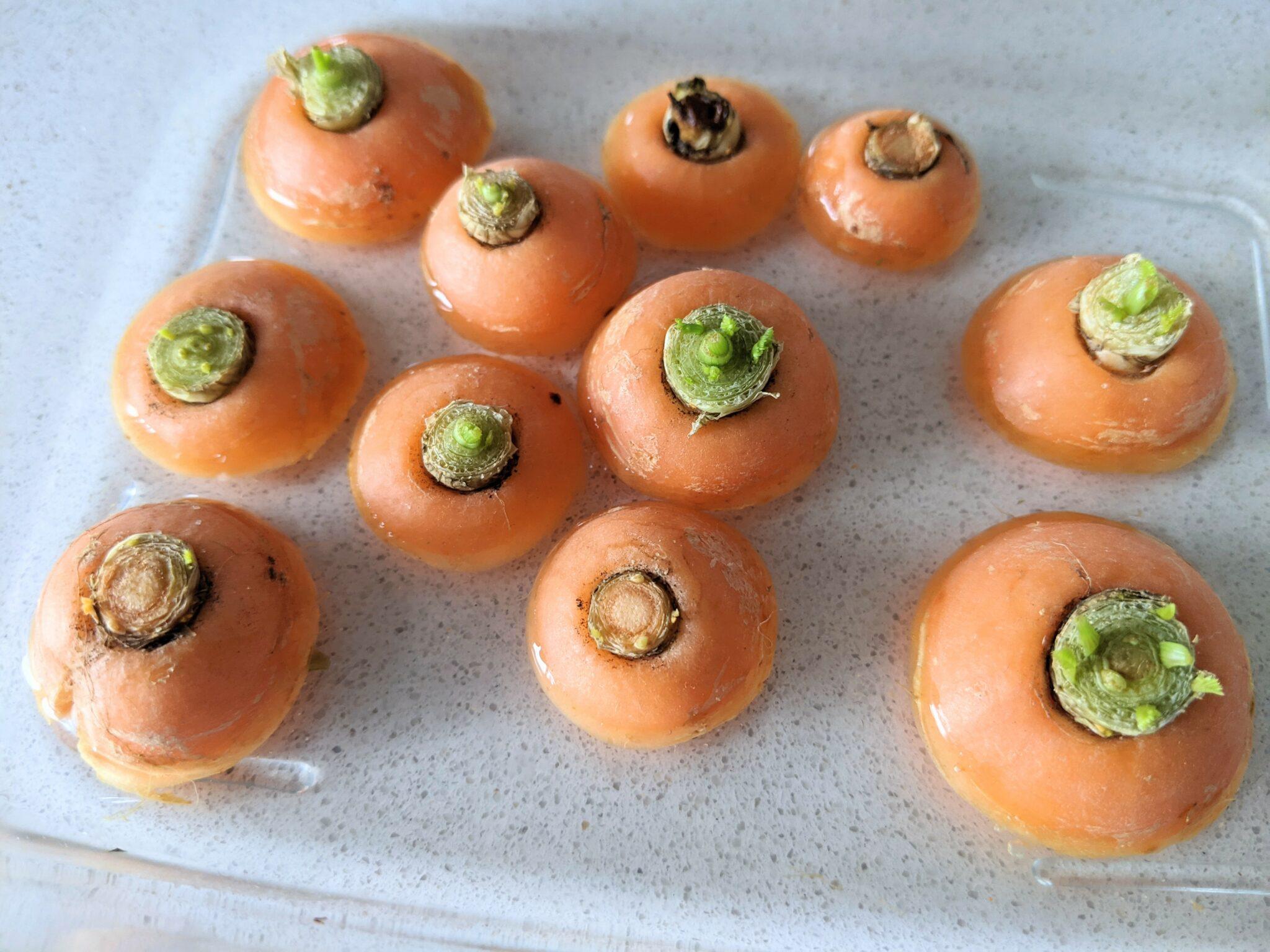 como cultivar cenoura