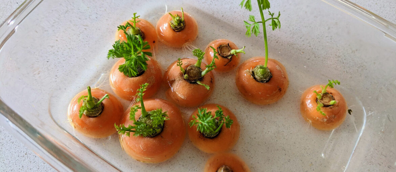 como-plantar-cenoura-na-agua
