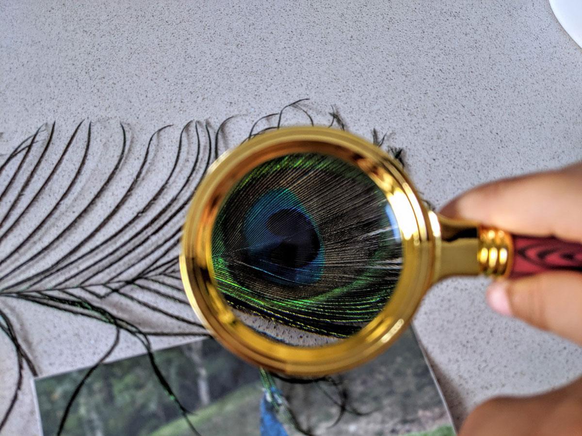 Atividade de artes com cores do pavão