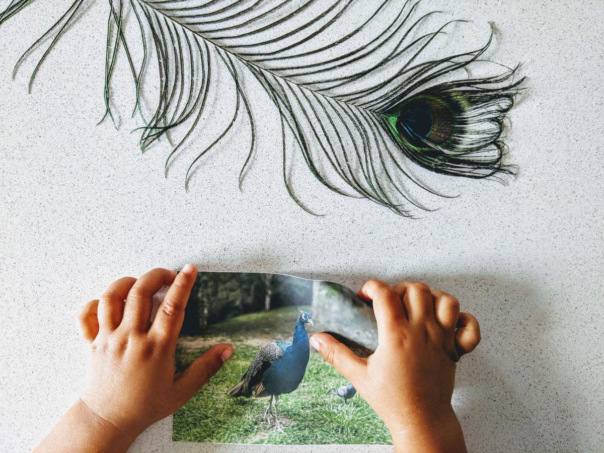 atividade sobre pavao para pintar