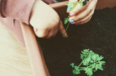 projeto de jardinagem na educacao infantil