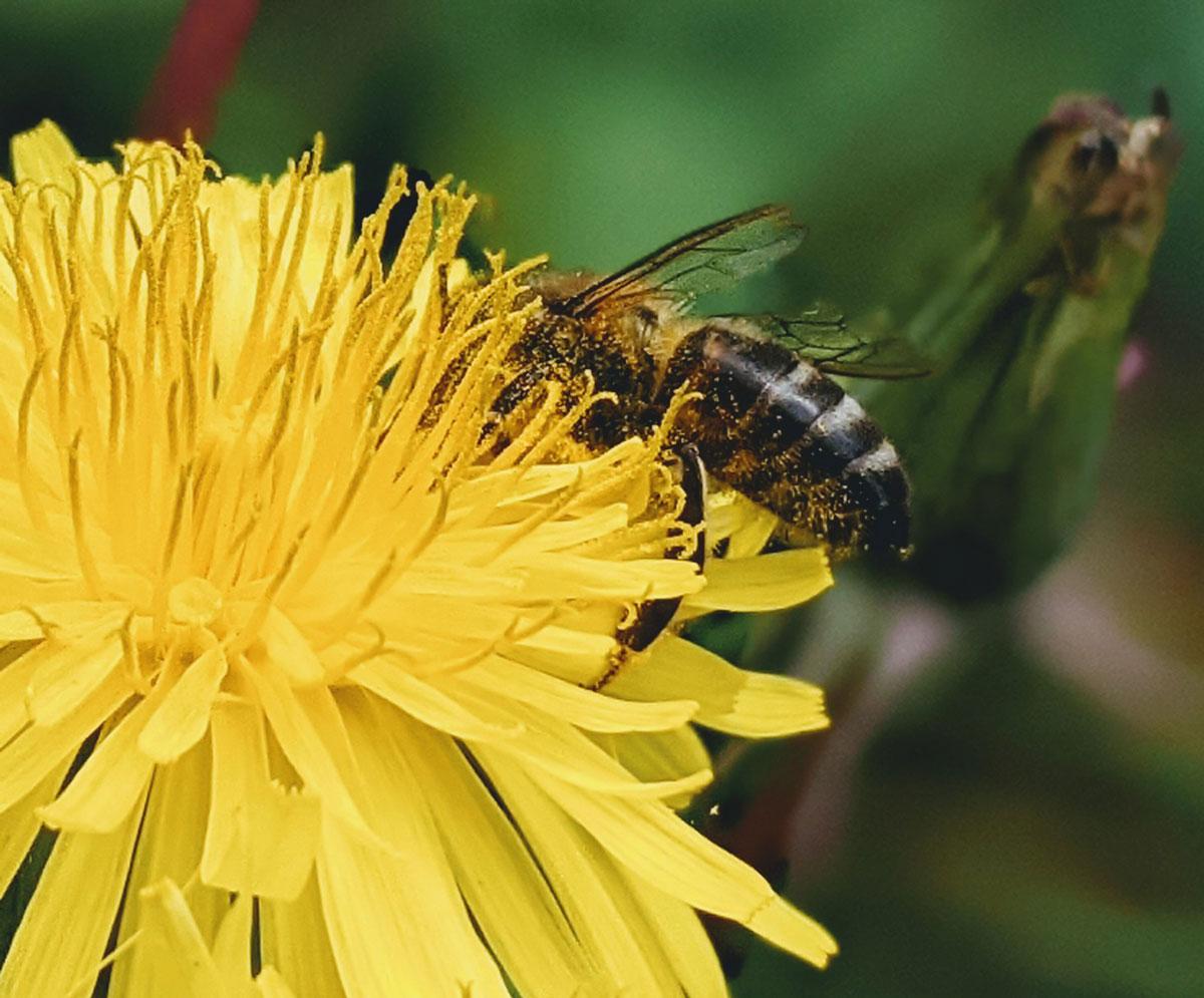 Atividades sobre flores e abelhas
