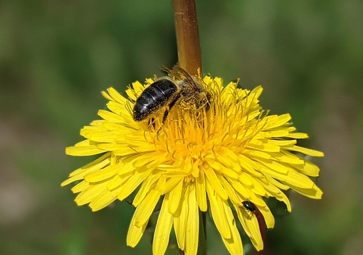 Atividade sobre flores polinizadas por insetos