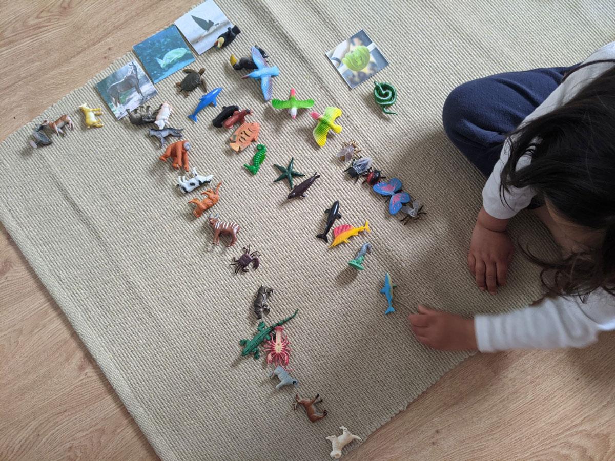 Atividade sobre locomoção dos animais Educação Infantil
