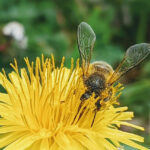 Atividade sobre polinização das flores para Educação Infantil