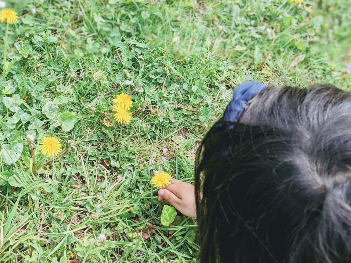 Atividade sobre polinização das flores