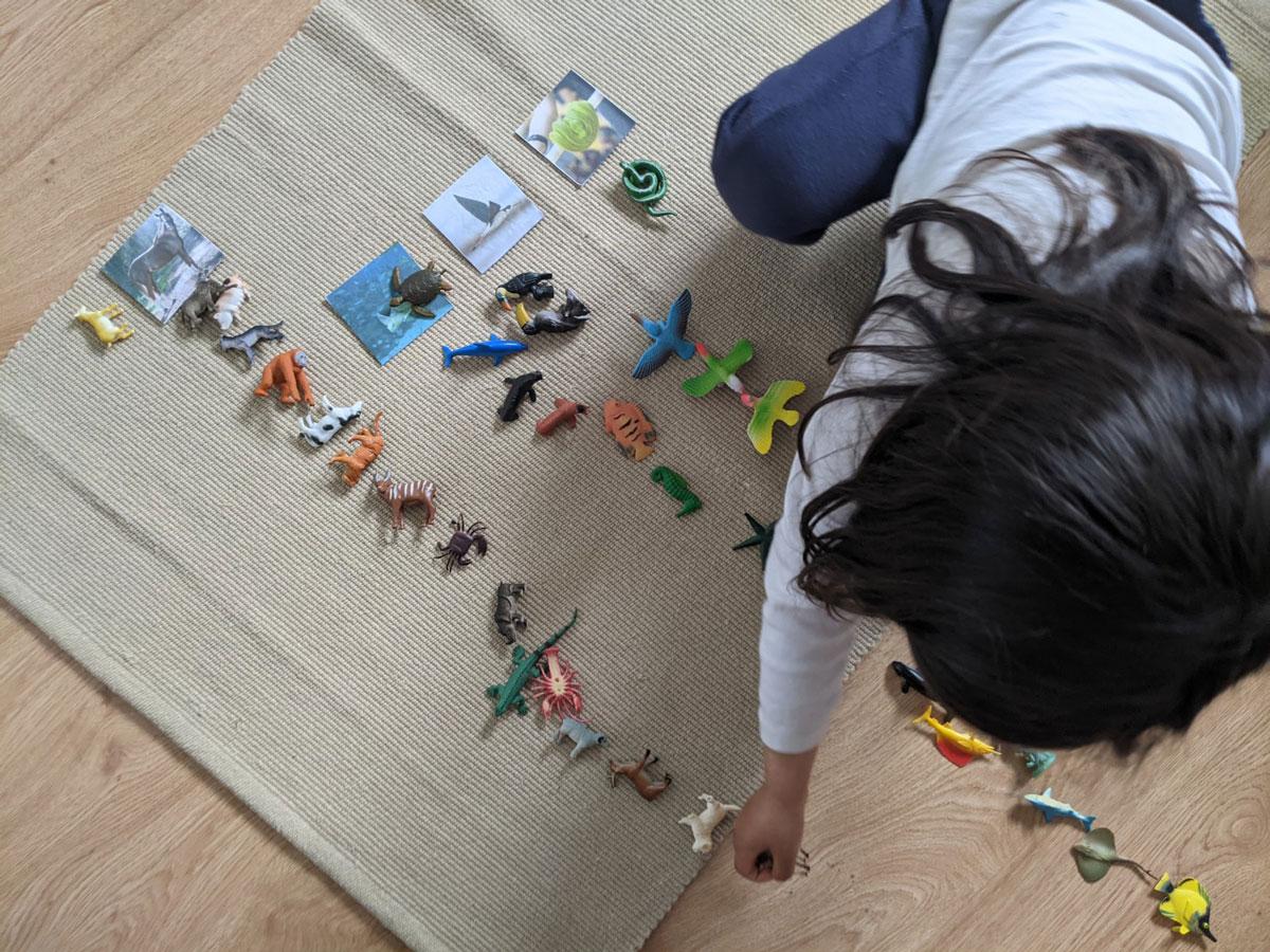 Locomoção dos animais Educação Infantil